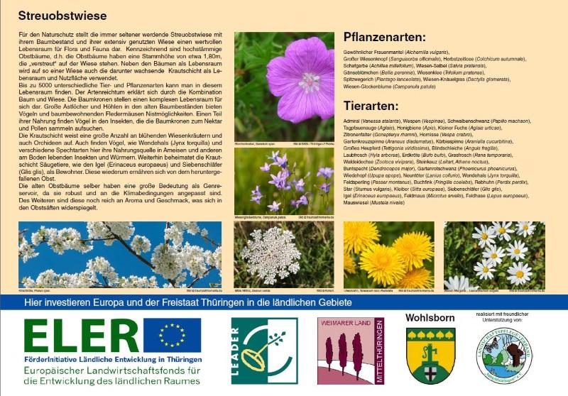 Informationstafel: Streuobstwiese - Pflanzen- und Tierwelt, Gemeinde Wohlsborn