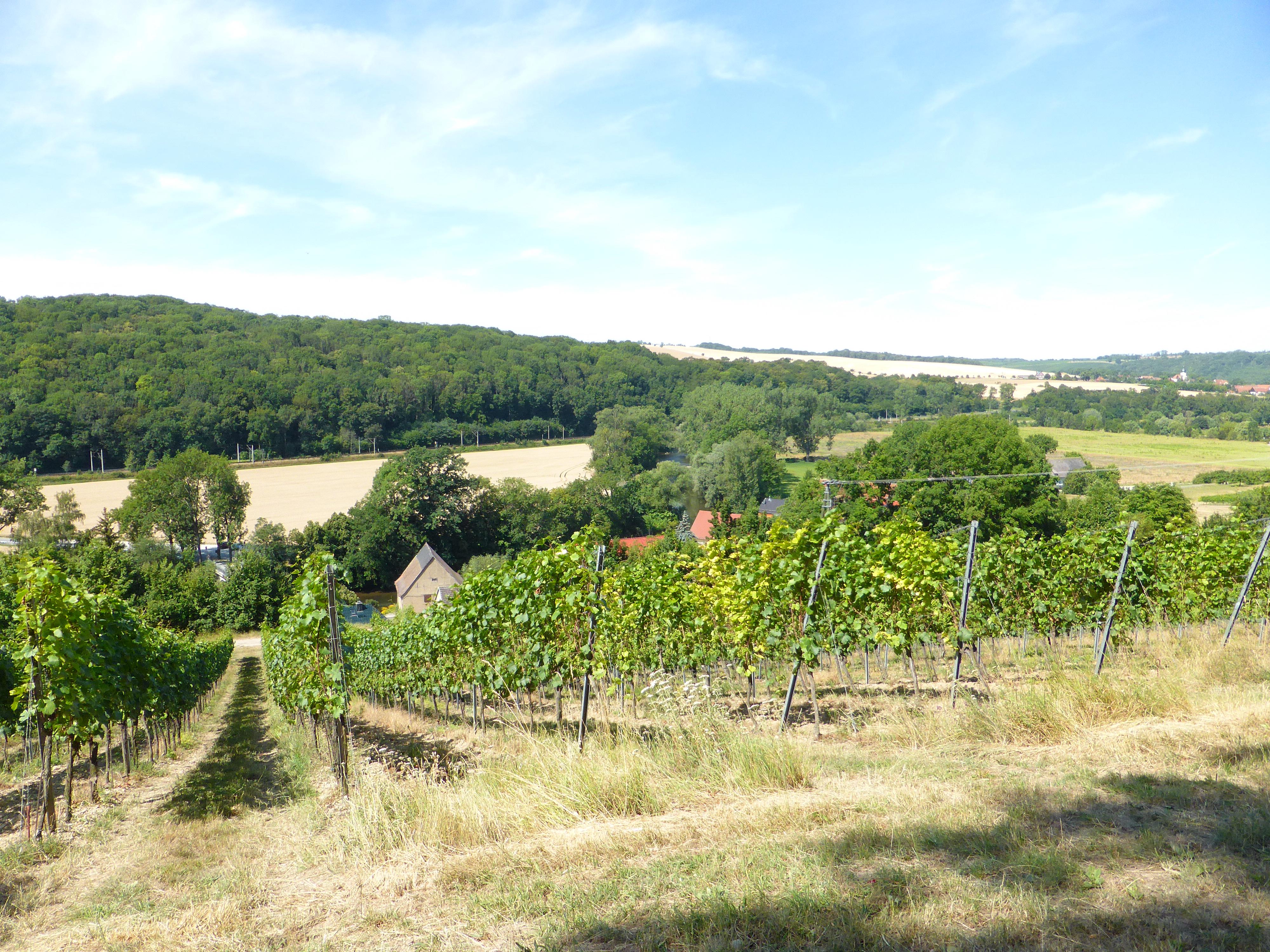 Weingut Zahn, RAG Weimarer Land - Mittelthüringen e.V.