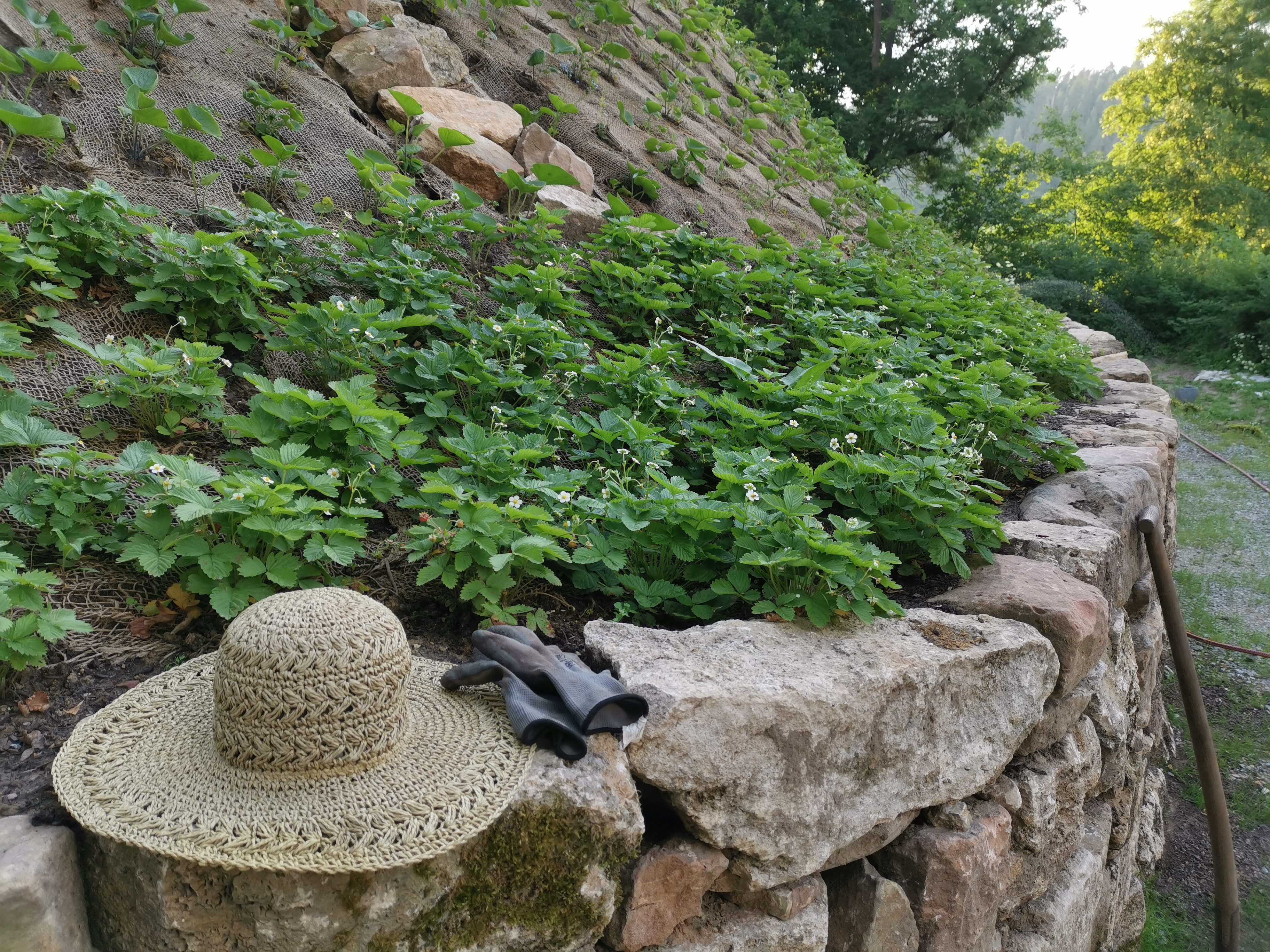 Burg Tannroda: Pflanzungen, Stiftung Burg Tannroda